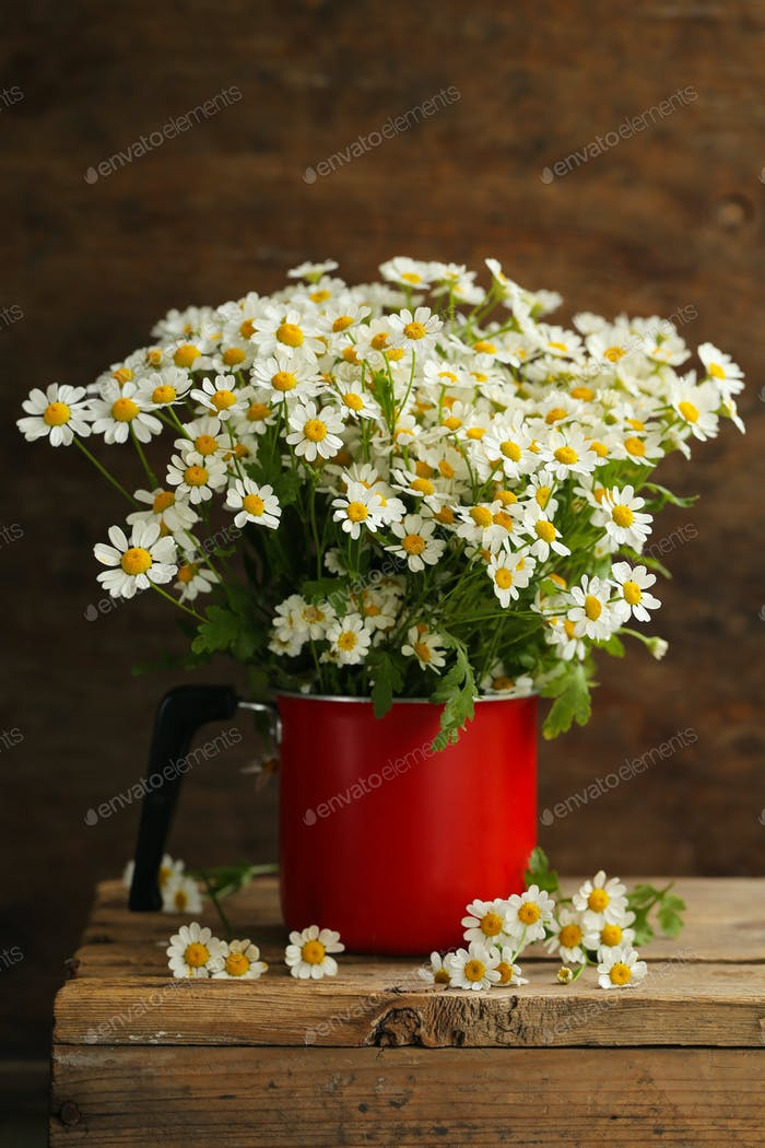 Bouquet of Wildflowers, Chamomile