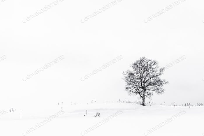 Beautiful landscape with lonely tree in snow winter season