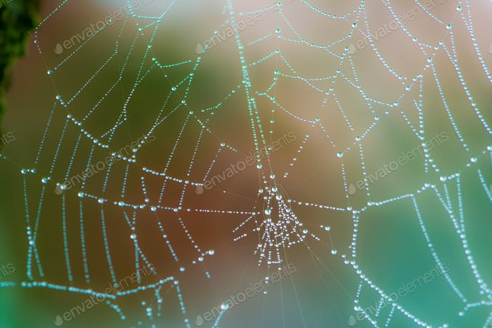 Closeup of a wet spiderweb wtih dew drops