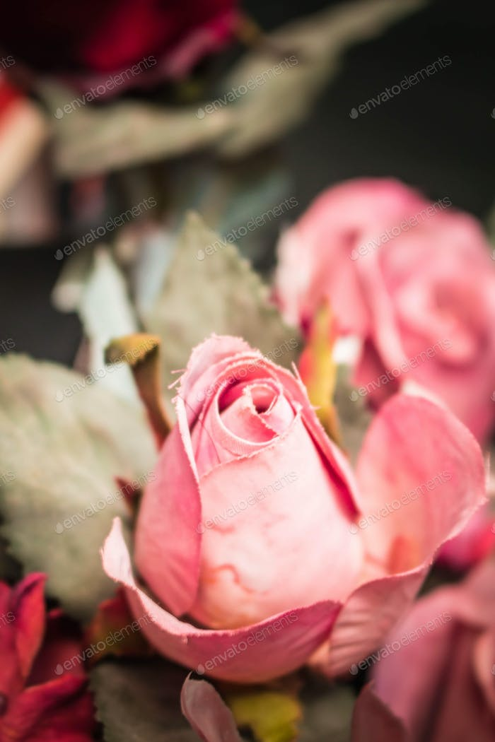 roses with blurry image.