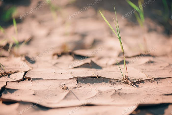 Water crisis. Cracked earth. Global warming problem. Dry land ground. Desert concept. Cracked soil