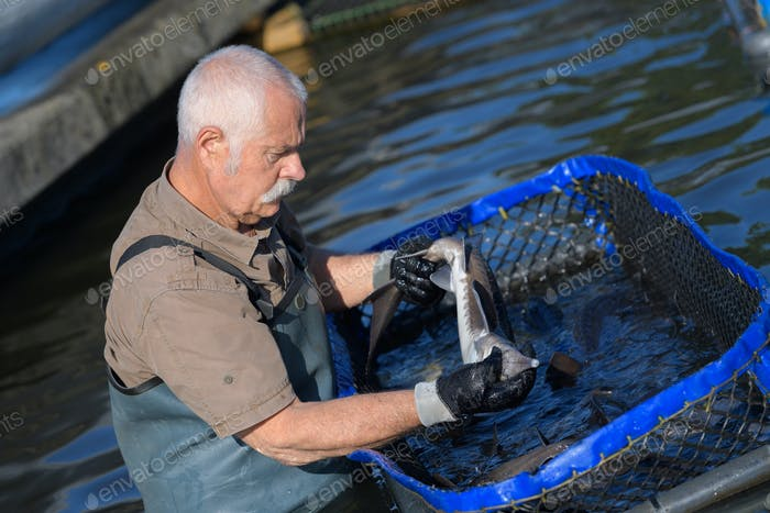 Fischzüchter im Wasser