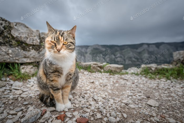 Cute cat from Kotor