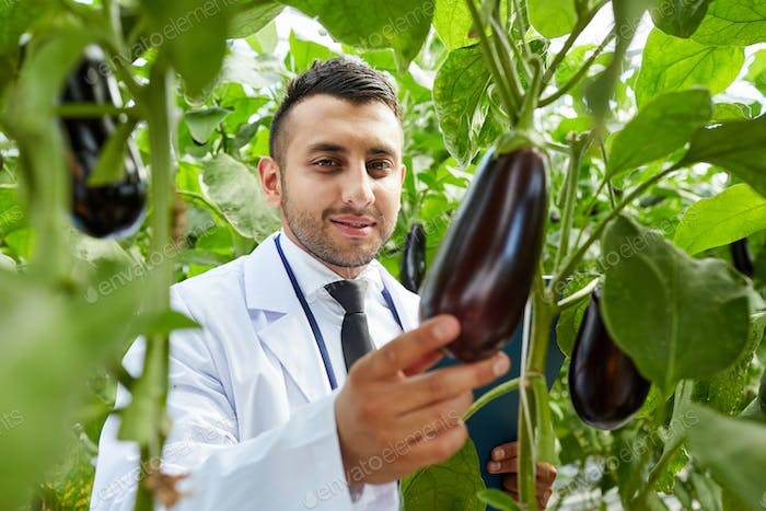 Satisfied with quality of aubergine