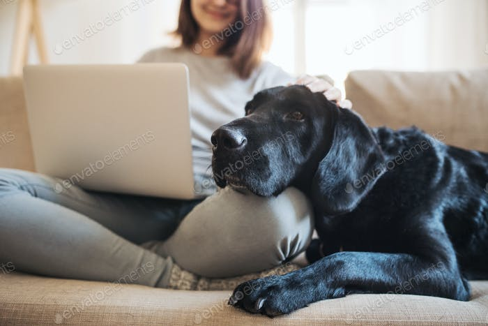 Ein Mittelteil von Teenager-Mädchen mit einem Hund sitzt auf einem Sofa drinnen und arbeitet an einem Laptop.