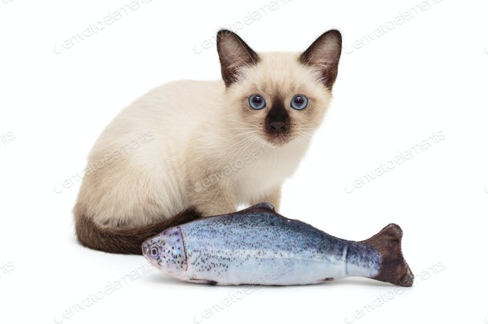 Siamese kitten playing toy fish