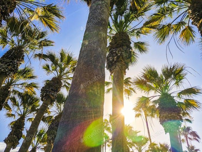 Beautiful tropical resort concept park