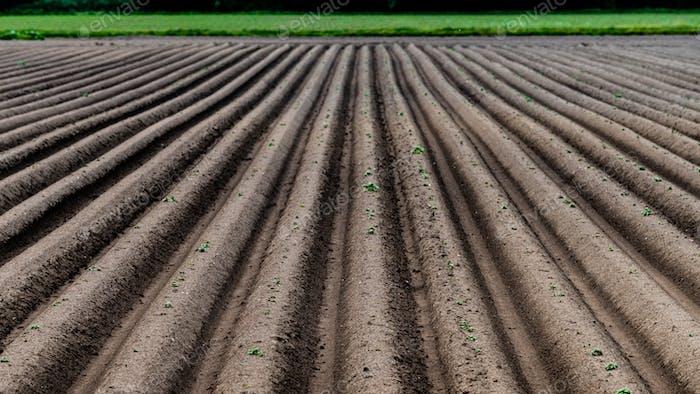 Gepflügtes Feld, Frühling landwirtschaftlichen Hintergrund