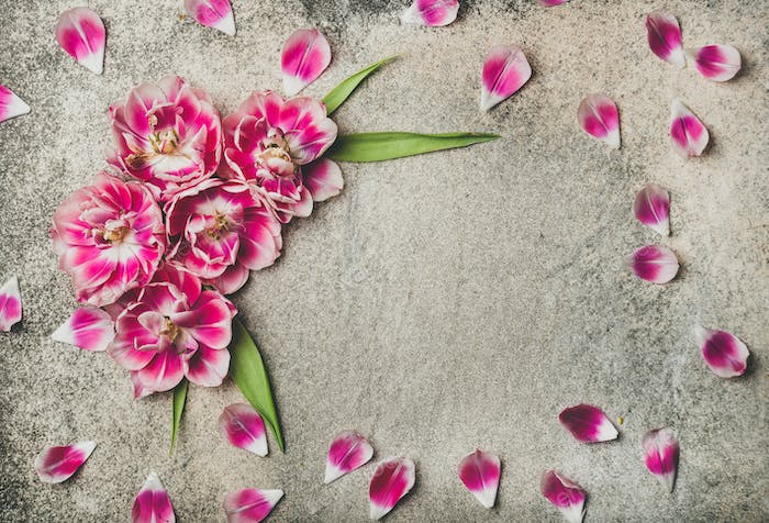 Flat-lay of pattern frame made of pink tulip flower petals