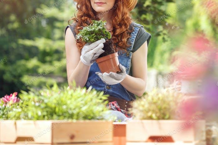 Woman removing flower from pot