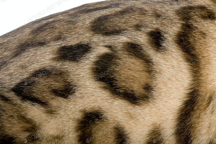 Fur of a Bengal