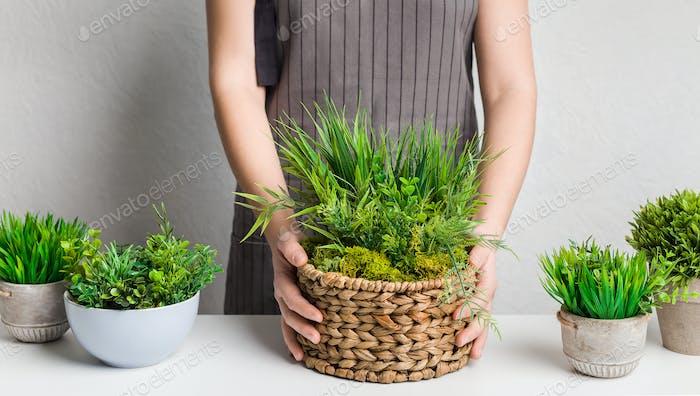 Home garden. Woman gardener transplanting evergreen plant