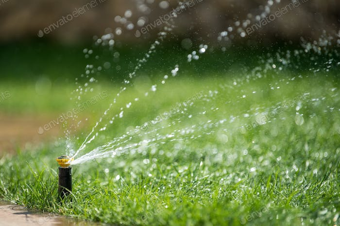 Sprinkler in action watering grass