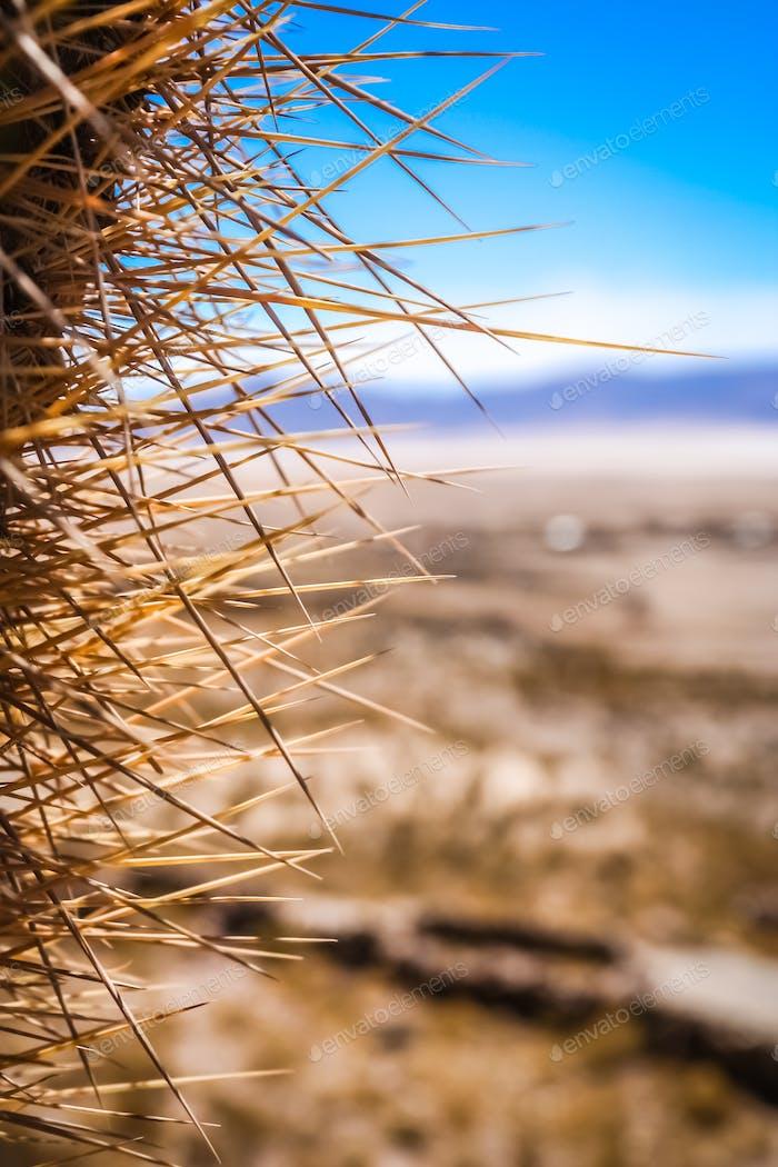 Close up of sharp cactus thorns