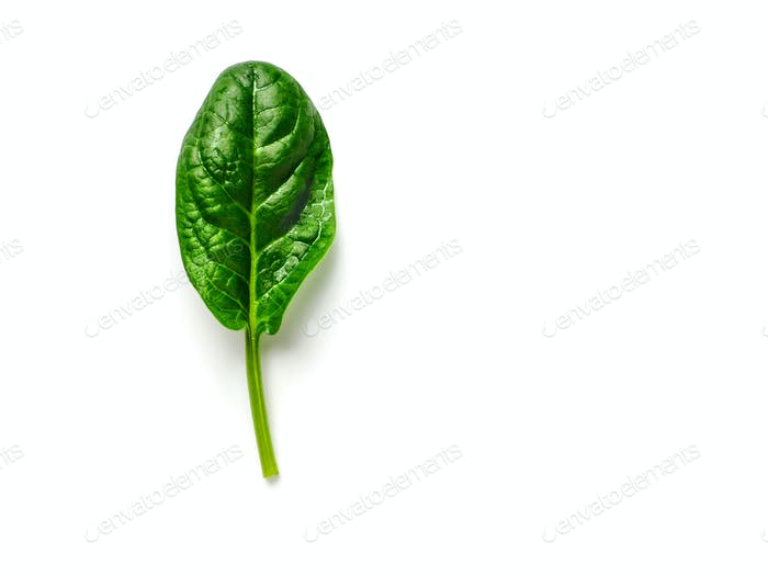 One baby spinach leaf isolated on white