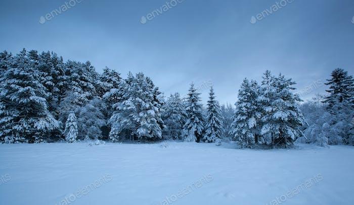 красивый зимний пейзаж снежное дерево
