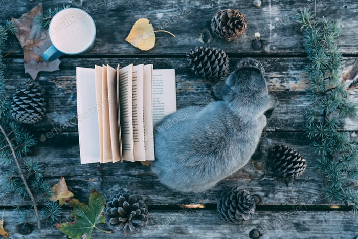 Bunny pet and Book on a wooden table with coffee and pines outdo