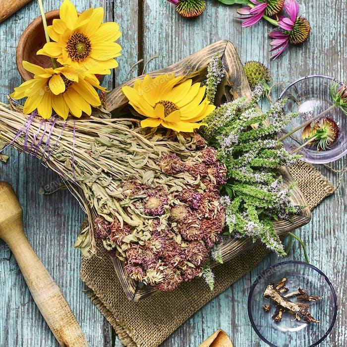 Medicinal herbs and plants