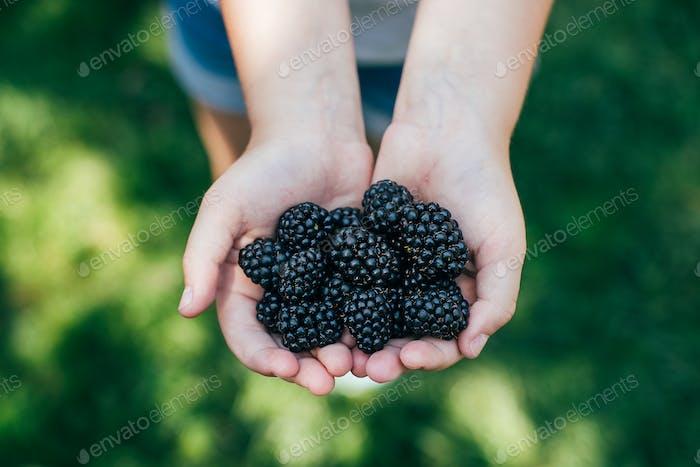Girl Holding Freshly Picked Blackberries. Summer Berry Food. Organic food