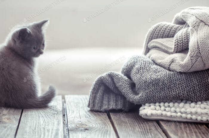 kitten near sweater