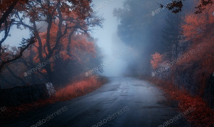 Mystical autumn forest with road in fog