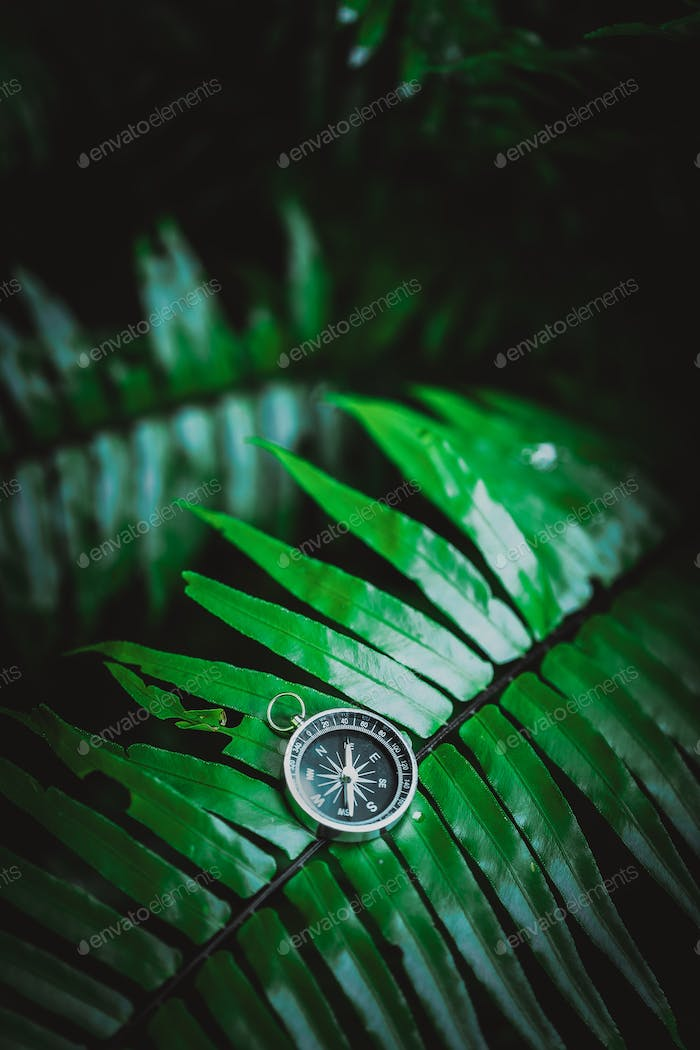Compass laying on fern leaf in a vivid moody tropical jungle foliage. Adventure discovery travel