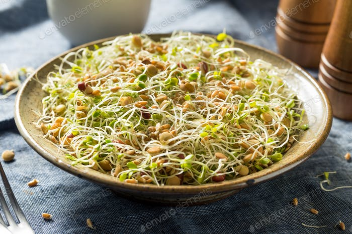 Raw Organic Bean Sprout Salad