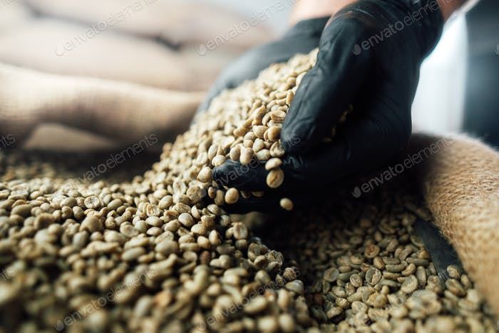 raw coffee beans pouring from a handful in a bag, against the background of a warehouse,