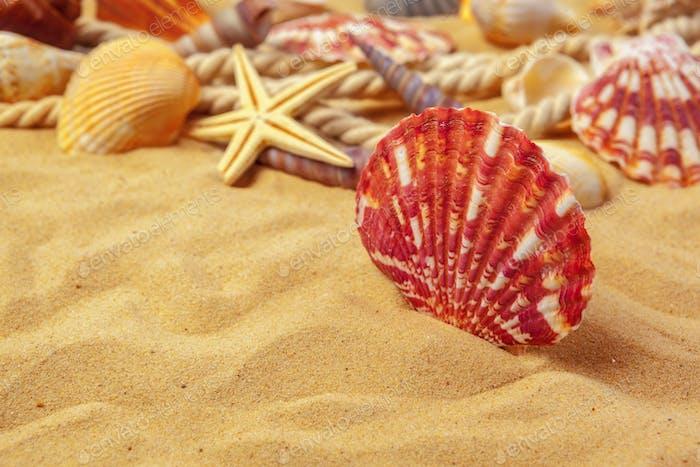Muscheln auf Sand. Hintergrund der Sommerferien am Meer