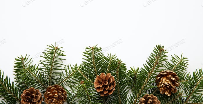 Fir twig and pine cones, white background