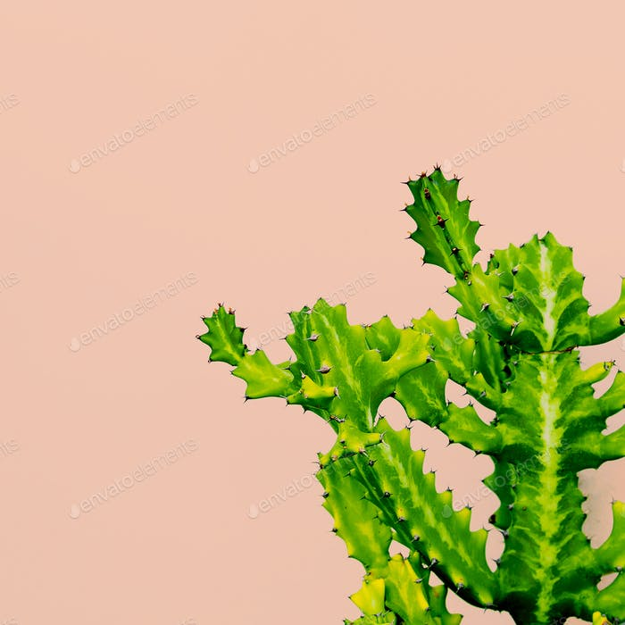 Outdoors. Minimal design. Cactus on pink. Fashion for print Trop