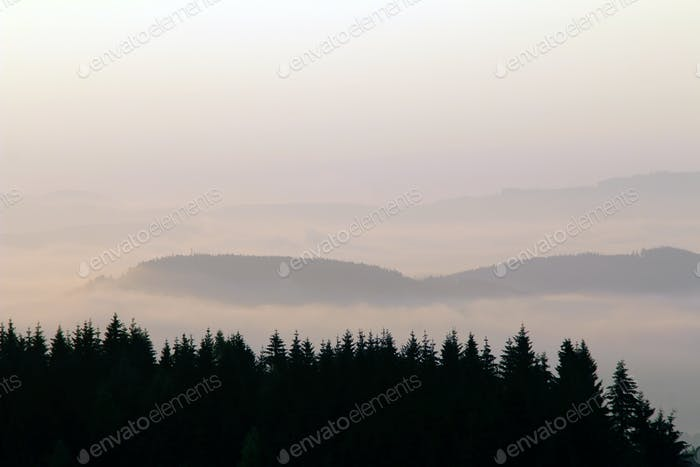 Forested hills in early morning mist