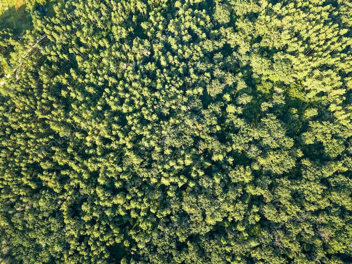 Green plantings of trees on a summer day. Aerial view from a drone deciduous forest. Ecological