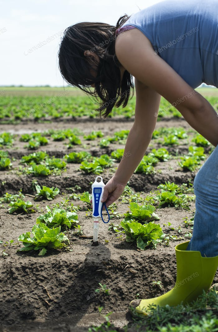 Woman use digital soil meter in the soil. Lettuce plants. Sunny day.