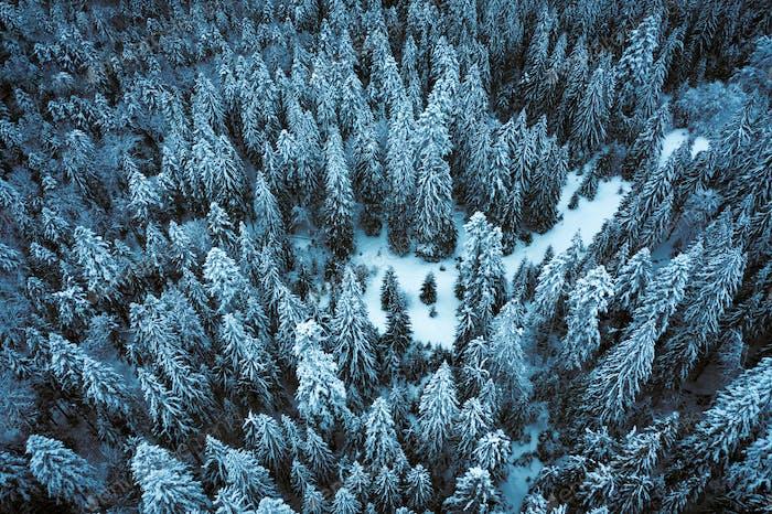 LuftDrohne oben nach unten fliegen über Winter Fichte
