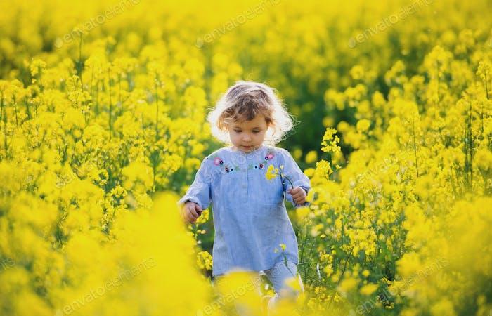 Vorderansicht der glücklichen kleinen Kleinkind Mädchen zu Fuß in der Natur in Rapsfeld