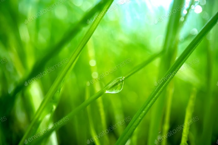 Green grass close-up super macro shooting.