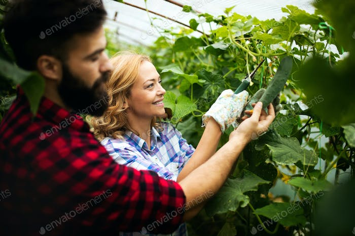 Farmer family picking organic vegetables in garden