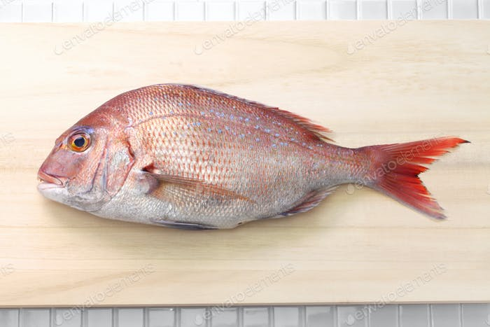 japanese red sea bream, Tai, Madai snapper