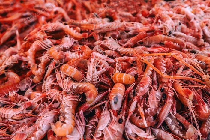Frische Garnelen Meeresfrüchte