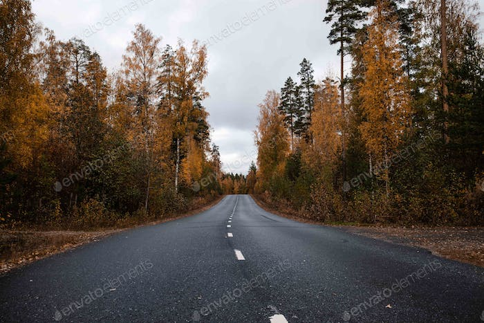 Beautiful moody scene of highway through Autumn forest.