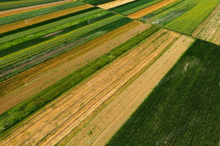 Aerial view of cultivated agricultural fields in summer