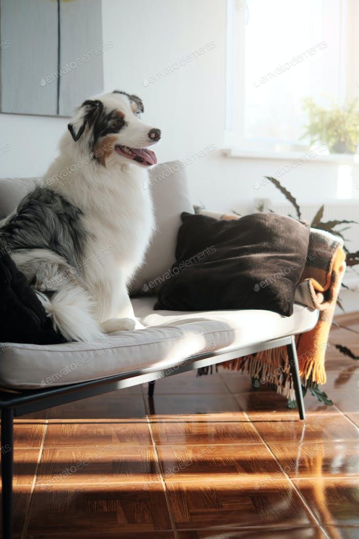 Haustier- und Menschenfreund sitzt auf Sofa und posiert vor der Kamera