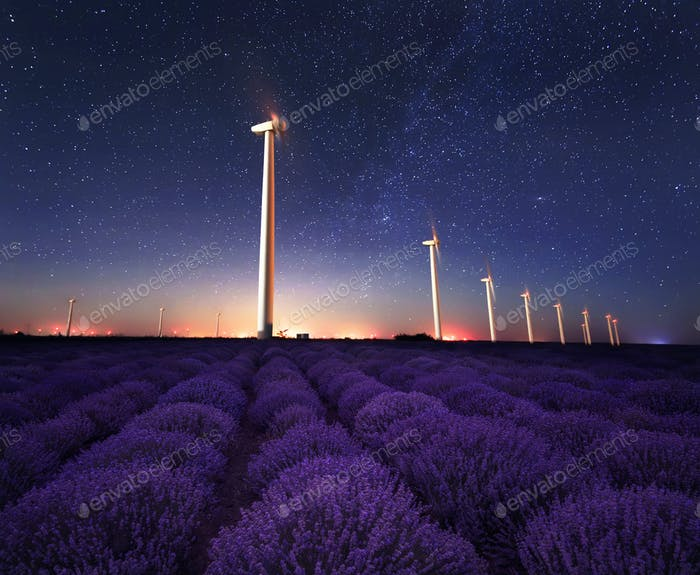 Lavender night