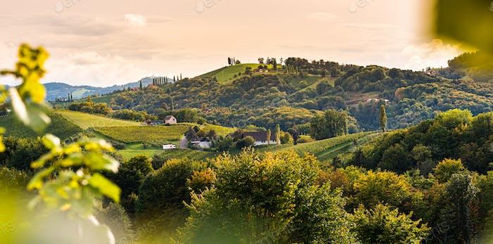 Weinberge in der Südsteiermark, Beginn des Herbstes