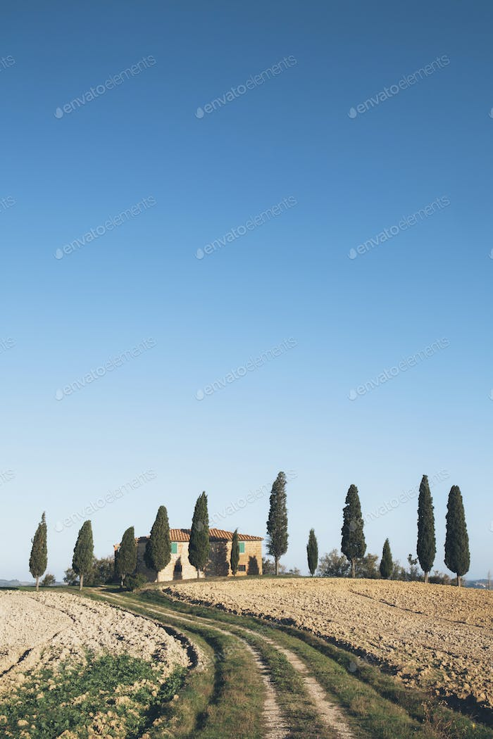 View across fields of a traditional farmhouse in a grove of cypress trees.