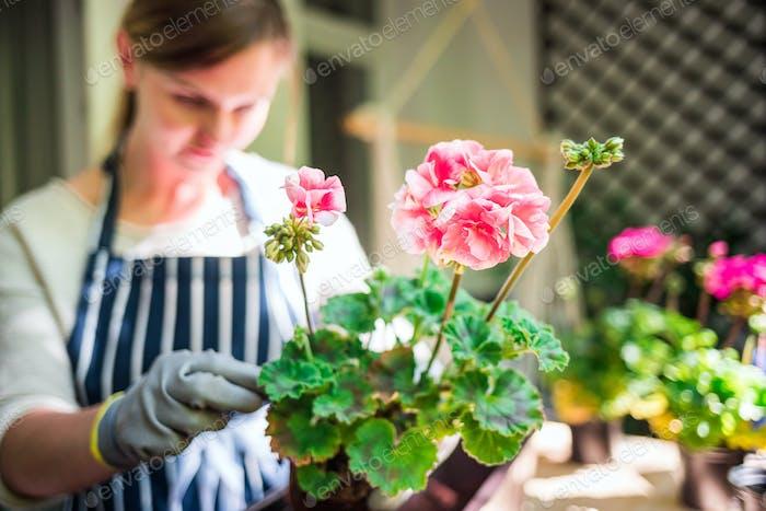 Frau pflanzt Blumen in einem Topf auf dem Balkon