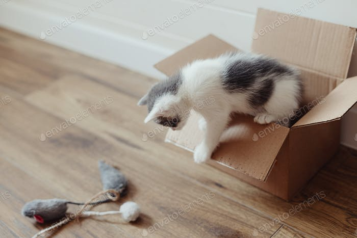Cute little kitten playing in cardboard box on floor. Adorable curious kitty in delivery box. Adopt