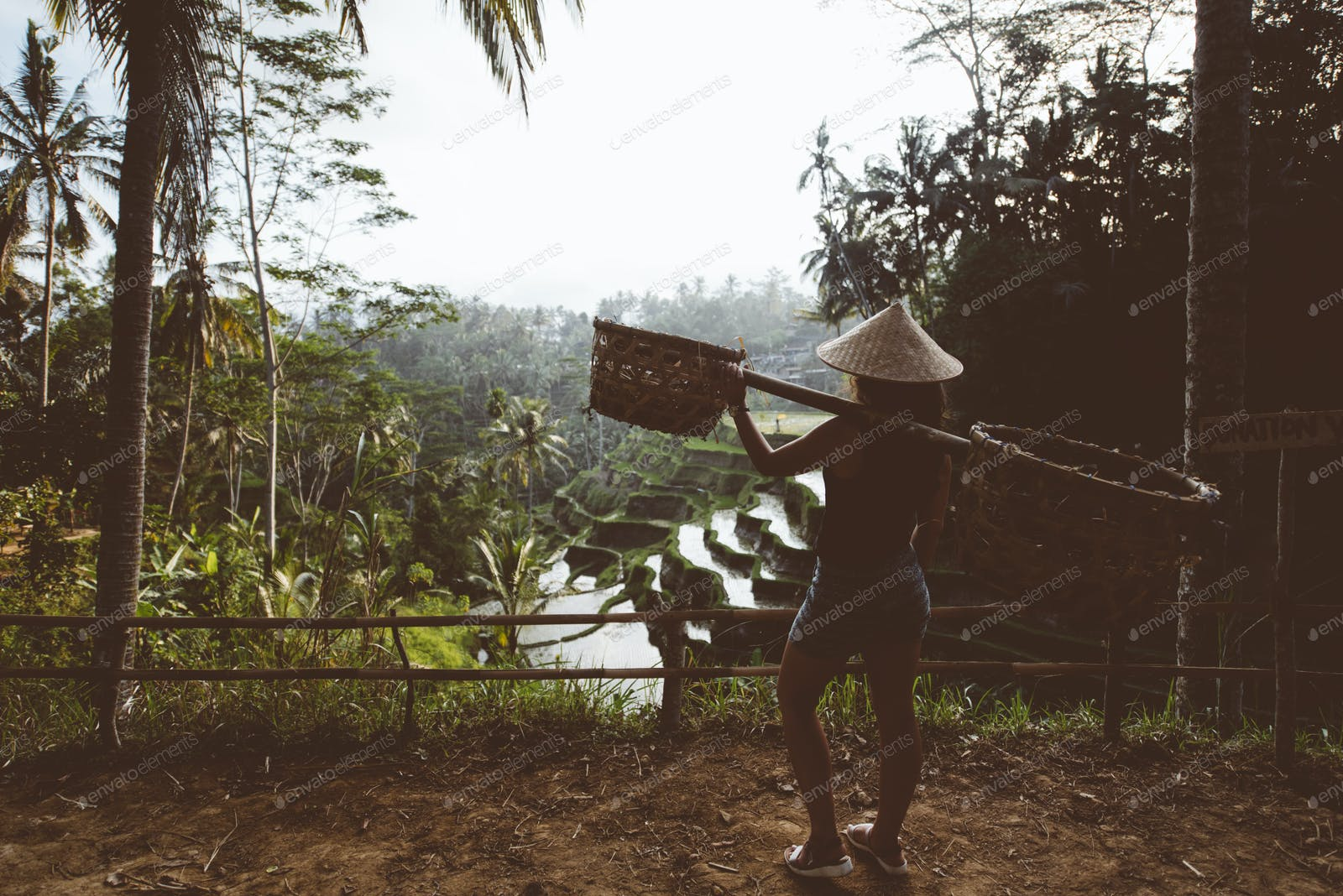 Agriculture Woman Carrying Tools On Rice Terraces In Ubud