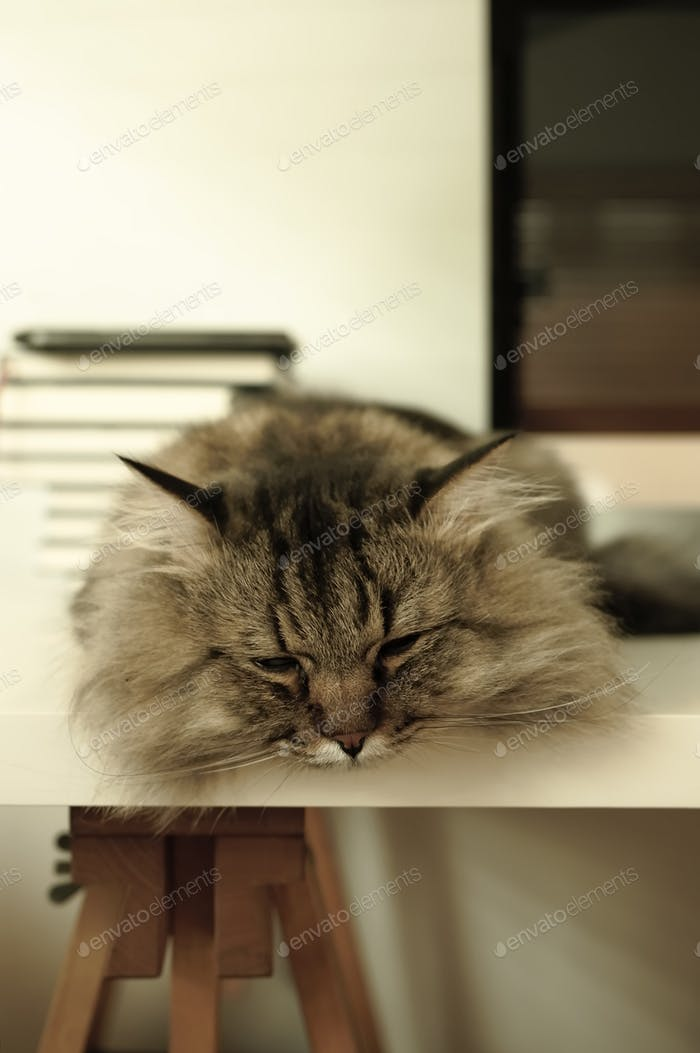 A lovely cat lying on white table in comfortable home.